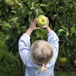 Zelf appels plukken