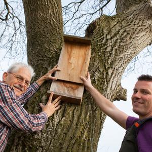 Vrijwilligers helpen vleermuizen
