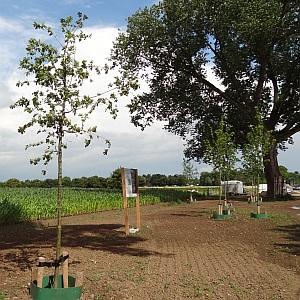Common Mile vol bijzonder gewone bomen