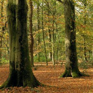 Bomen voor De Park