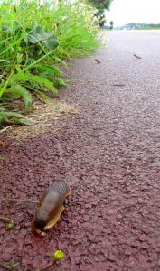 slak op pad